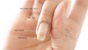 Nails Cuticles